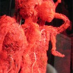 3d blood vessels