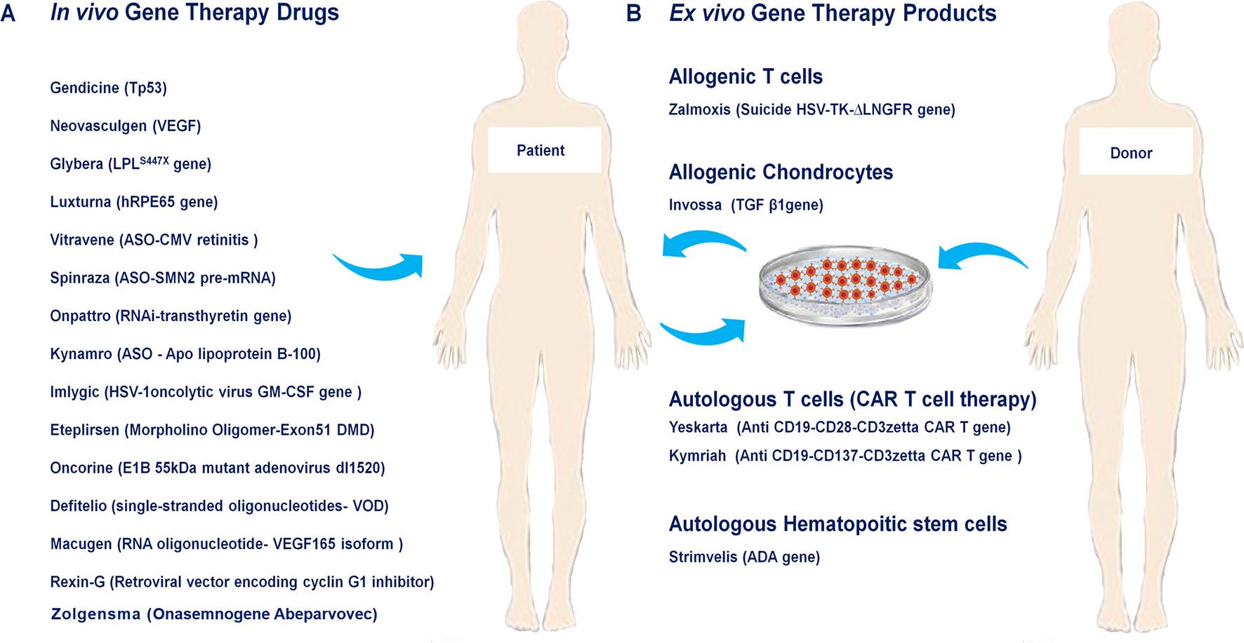 A list of approved human gene and cell-based gene therapy products.