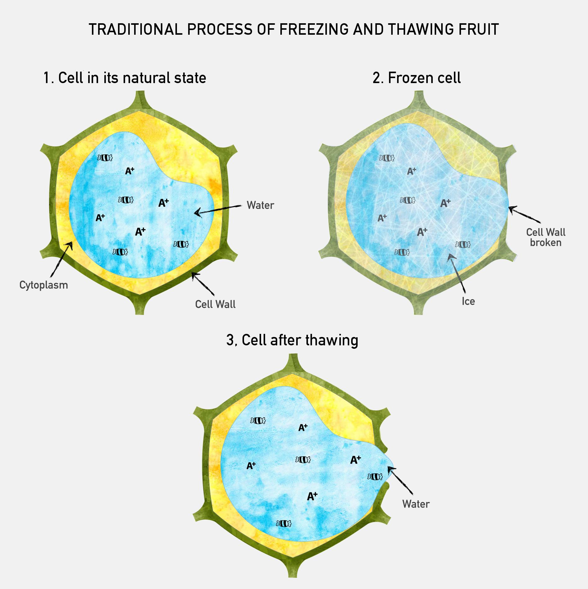 how to keep fish fresh without freezing