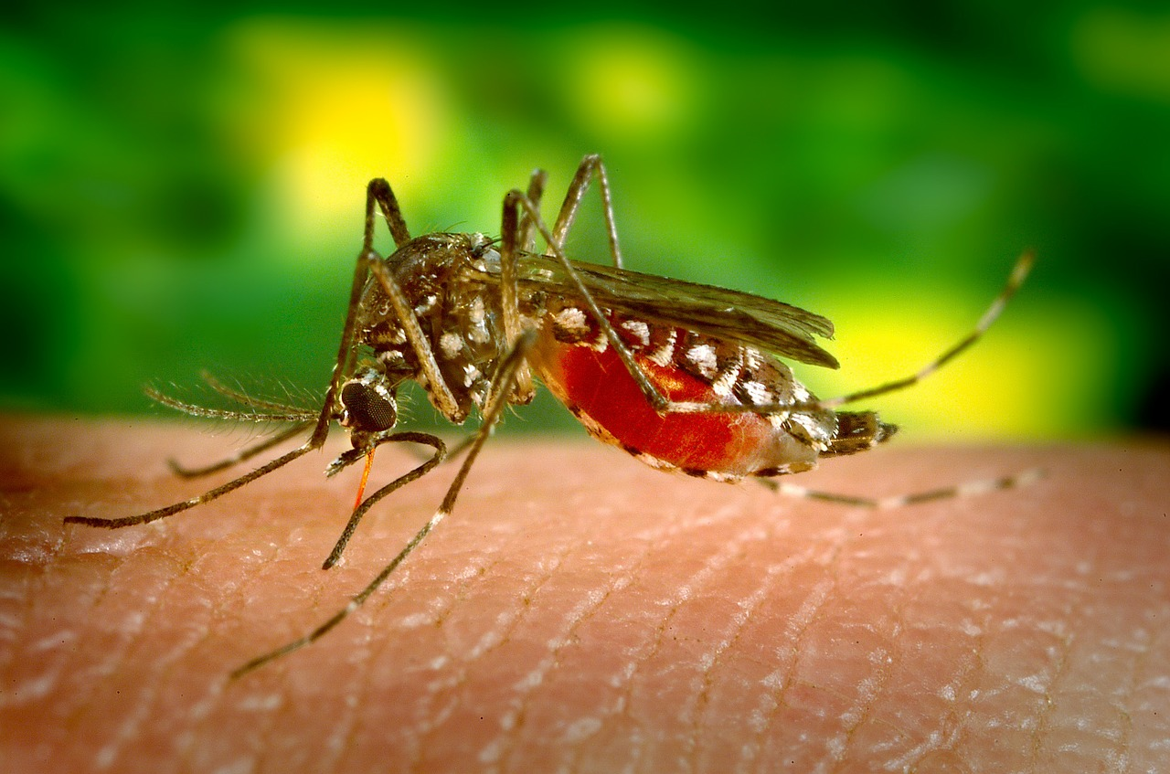 Vampires Zapped: Orally Administered Drug Suggests New Approach in Malaria Prevention