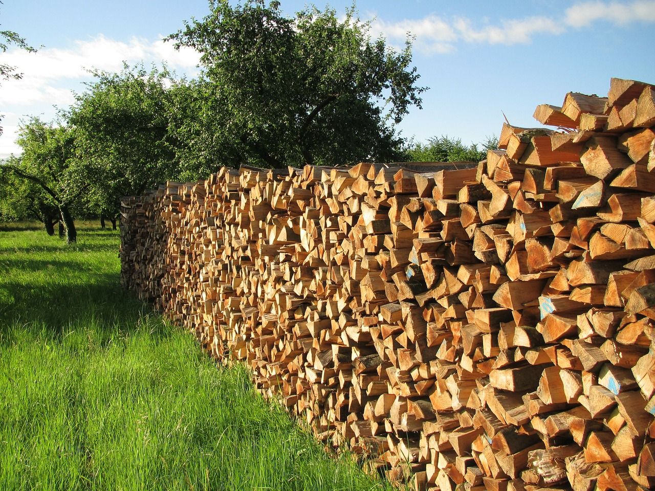 Energy from Biomass: Prospects and Challenges