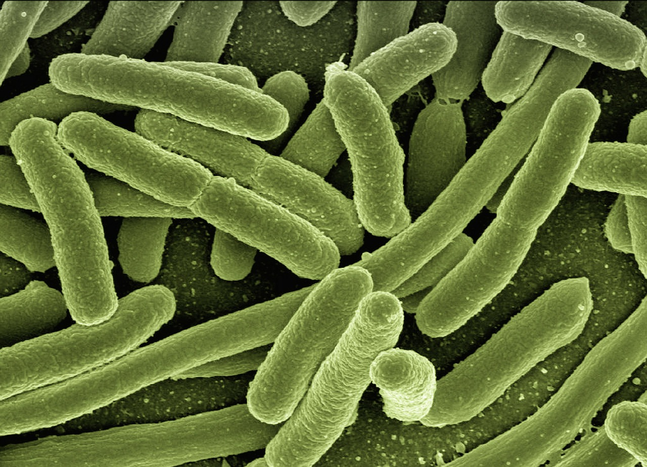 The CARB-X Initiative for Combating Antibiotic Resistance