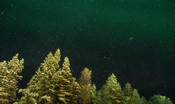 Could glowing trees be the future of street lighting?