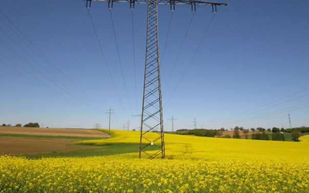 Can biofuels serve as a potential alternative energy source?